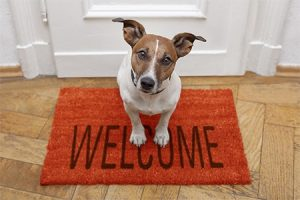 small dog sitting on a welcome mat