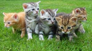 five kittens in a grassy field