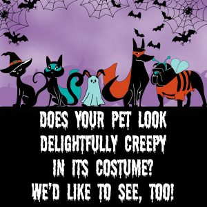 Does your pet look delightfully creepy in its costume? We'd like to see, too with this Halloween Contest