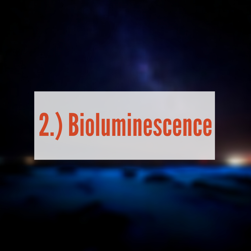 Bioluminescence at night in river |Bioluminescence